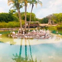 flamingo island- ITS MICKEY SHAPED!