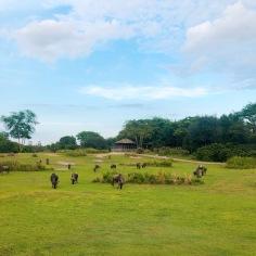 the view on kilimanjaro safari