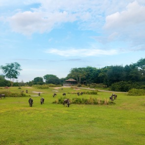 the view on kilimanjaro safari